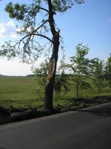 Copac de pe lângă șoseaua Arad-Oradea